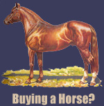 Buying a Horse?