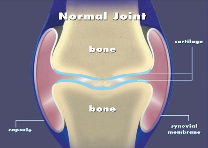 Normal Joint Diagram